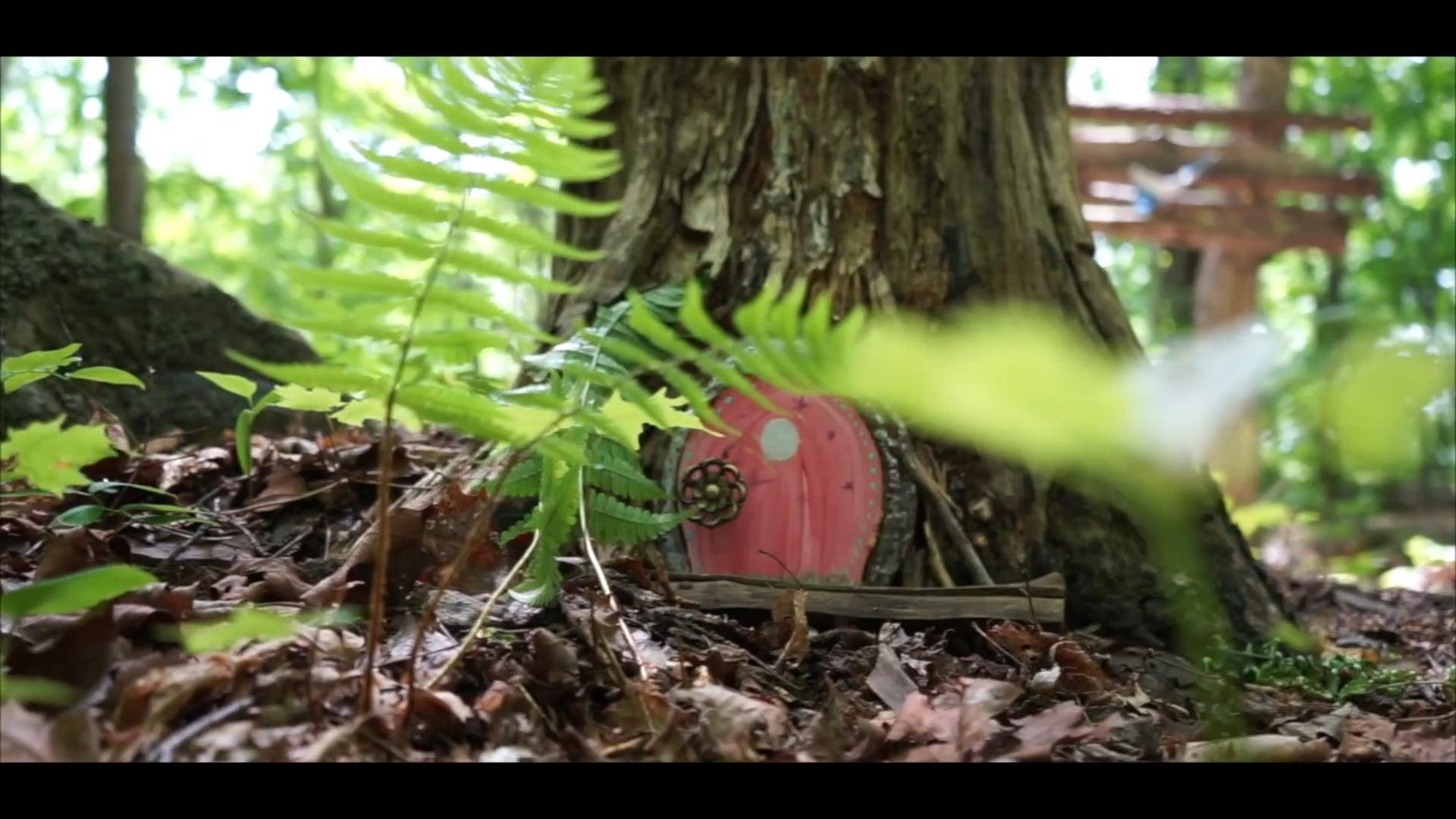 La Forêt d'Aslan!