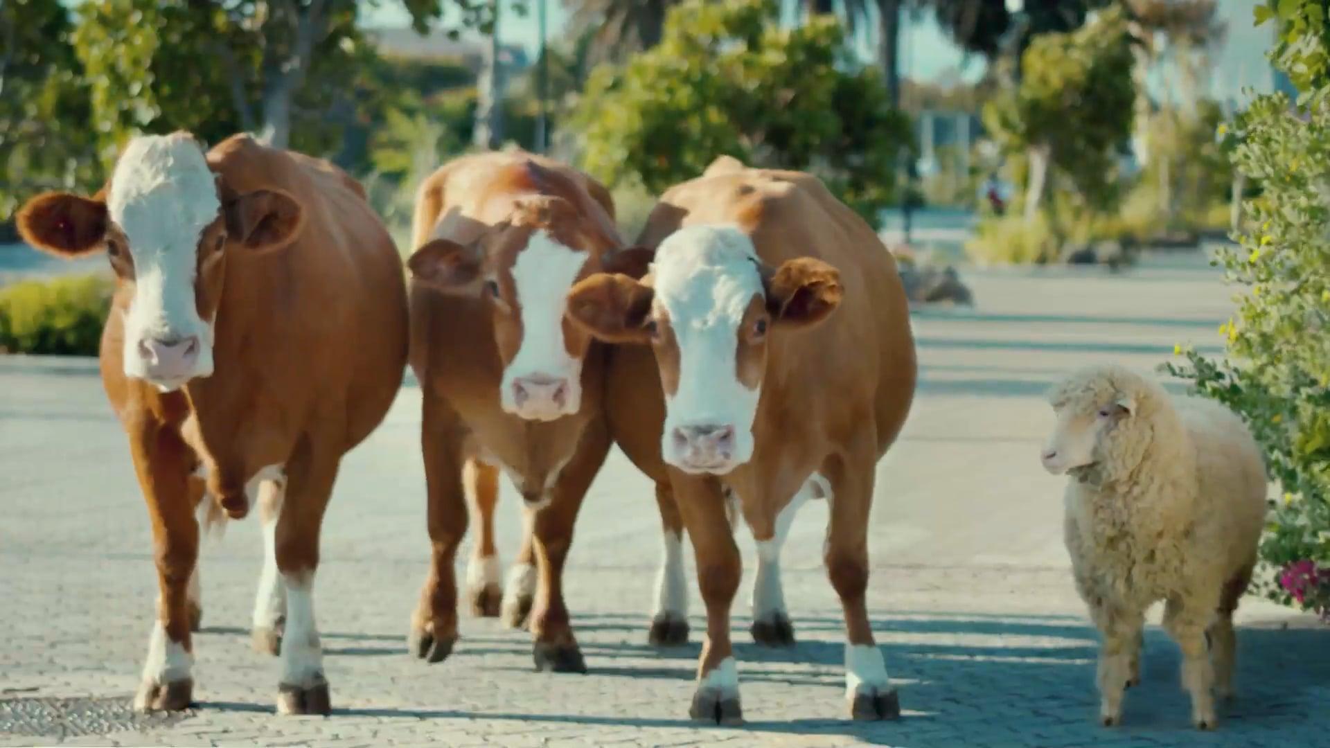 Paulo Henriques-Migros Supermarket Good Cows