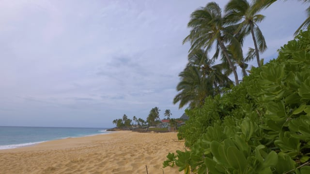 Hawaii Beaches. Palm Trees Trees at the Beach 2. Short Preview Video