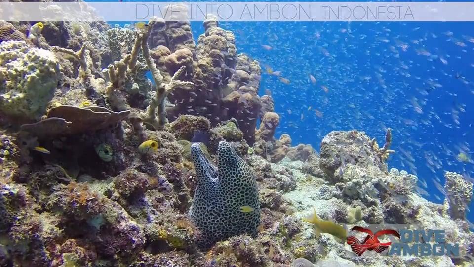 Dive Into Ambon