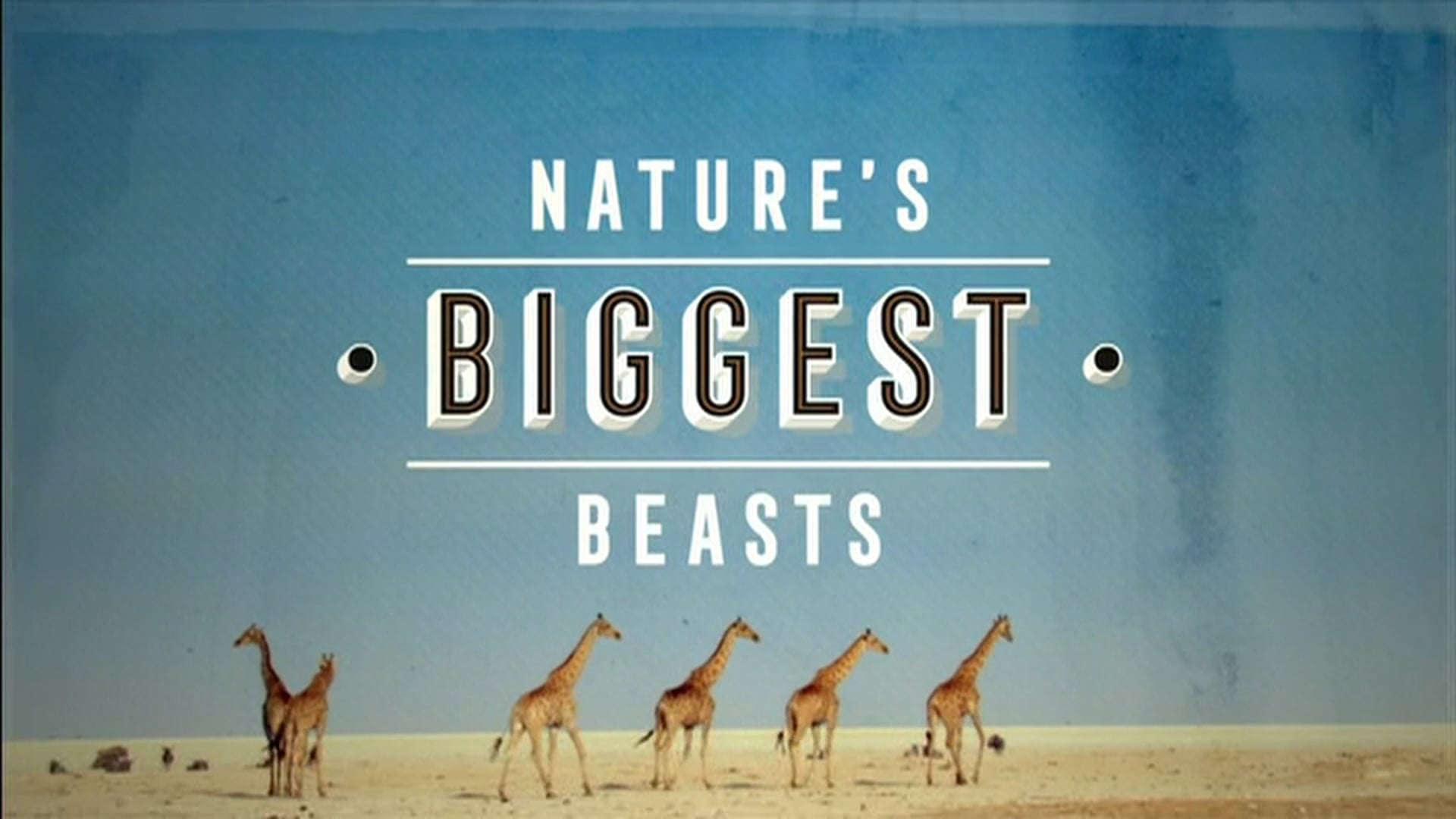 Natural World: Nature's Biggest Beasts. Pre and Post Title