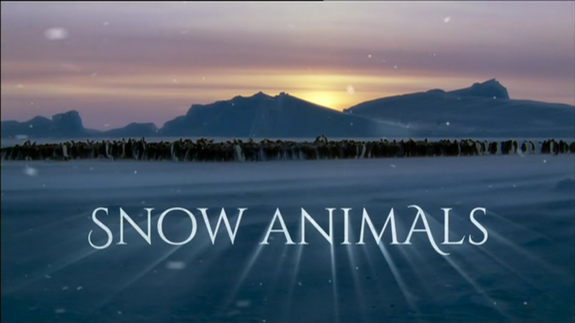 Snow Animals. Pre and Post Title
