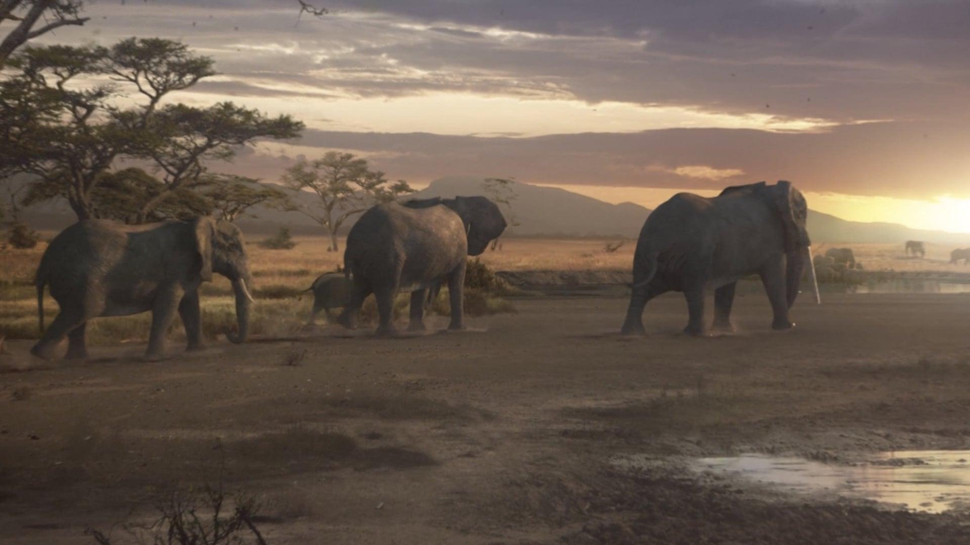 WWF: Just Like Us