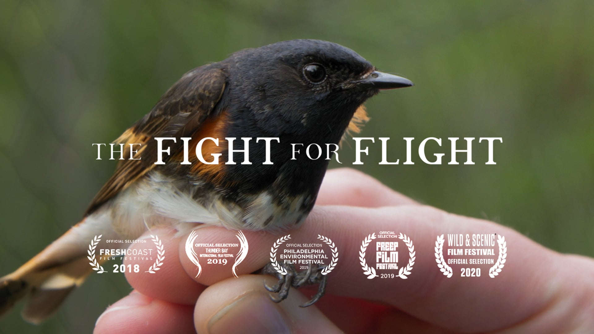 The Fight For Flight