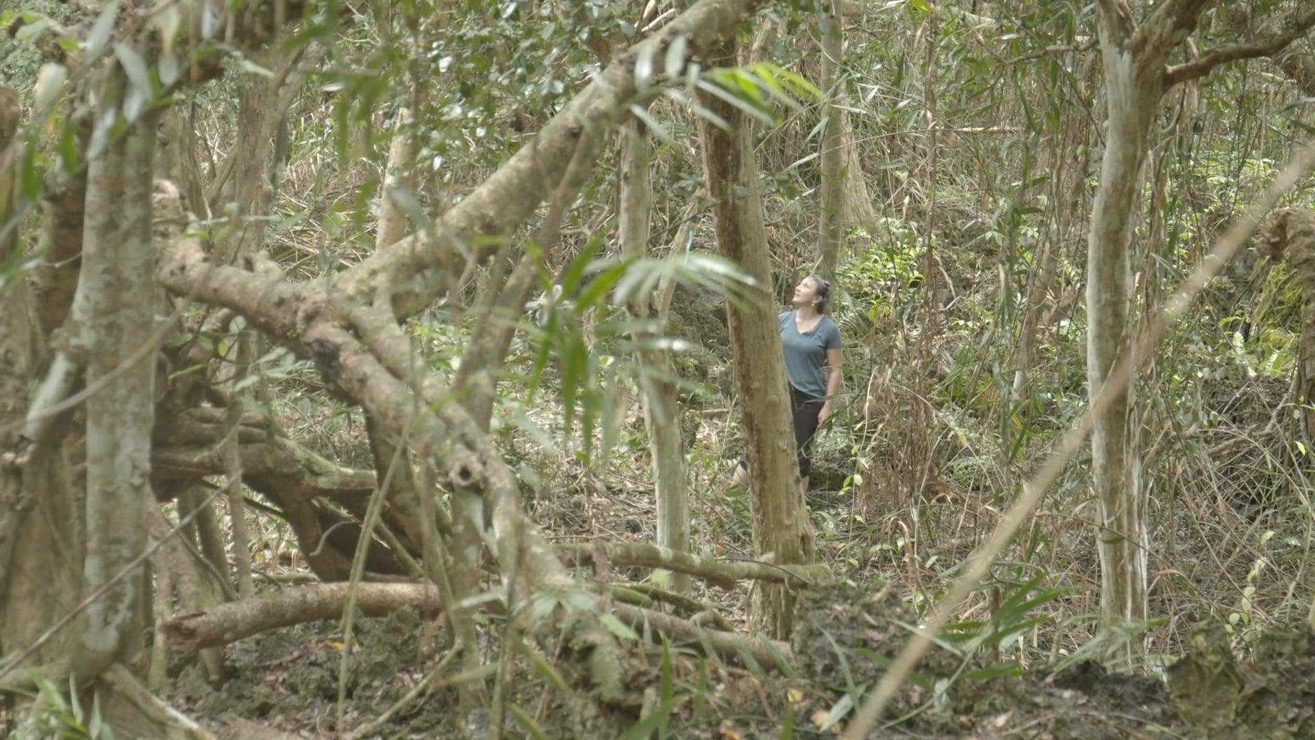 The Silent Forests  - documentary - trailer (dir. James Bateman)