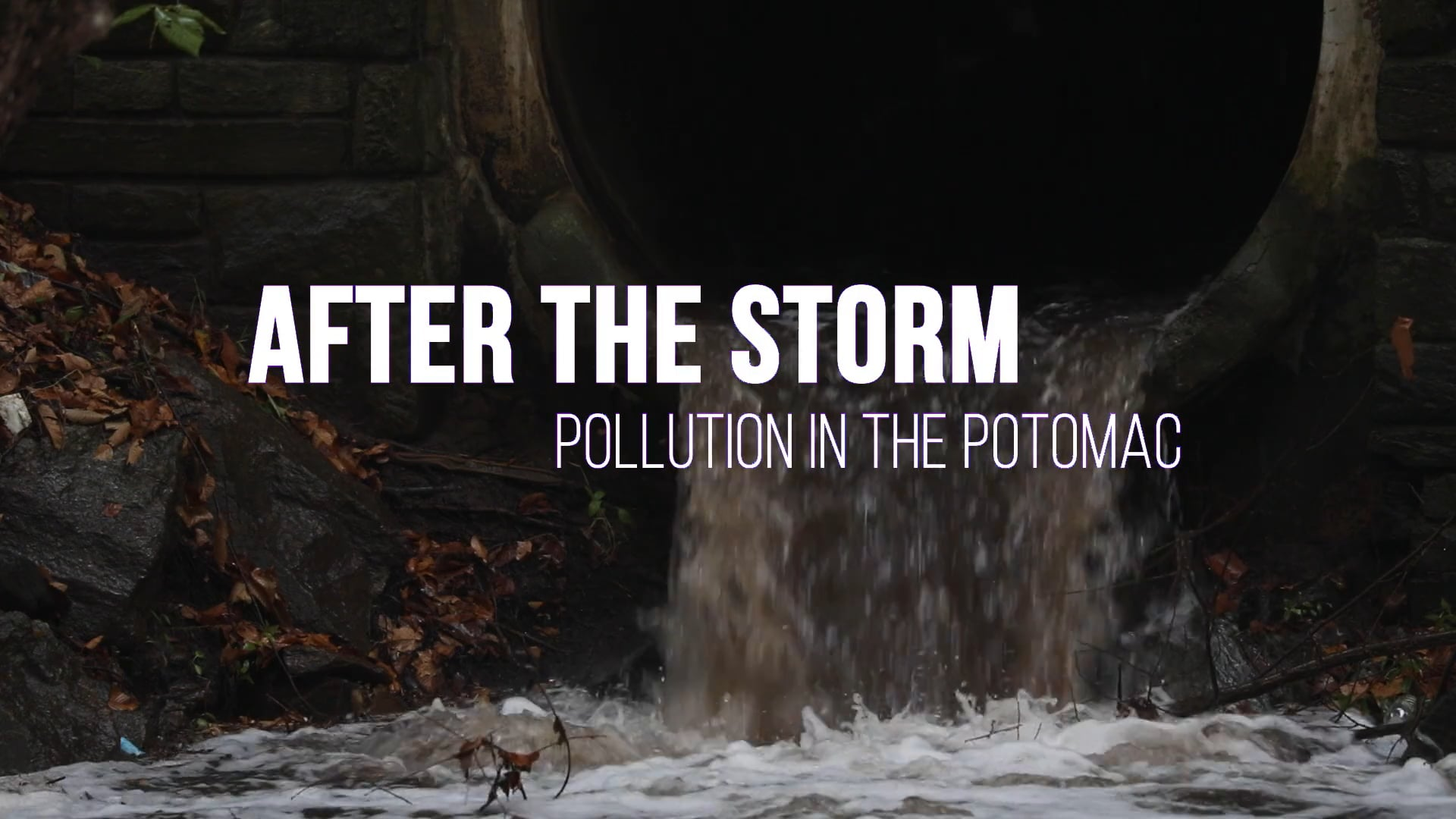 After the Storm: Pollution in the Potomac