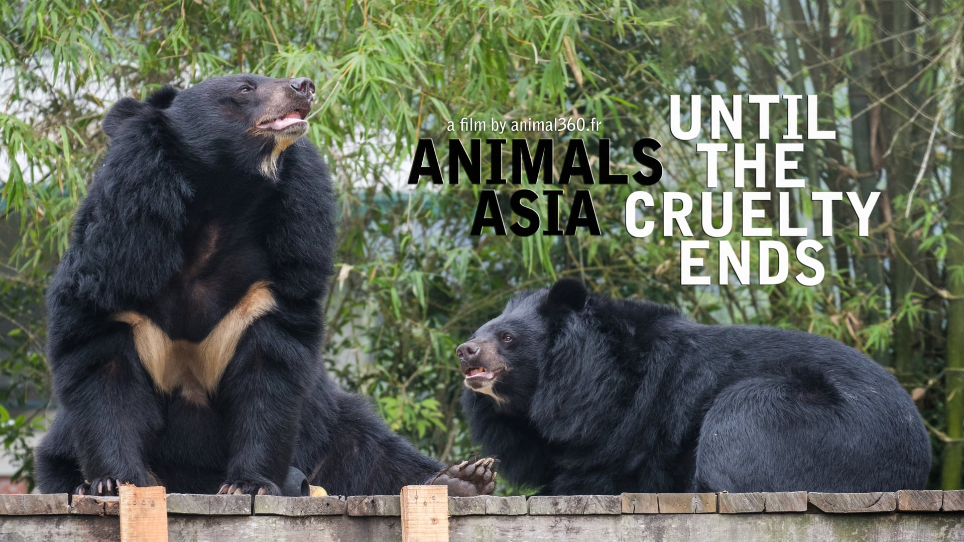 Animals Asia : until the cruelty ends