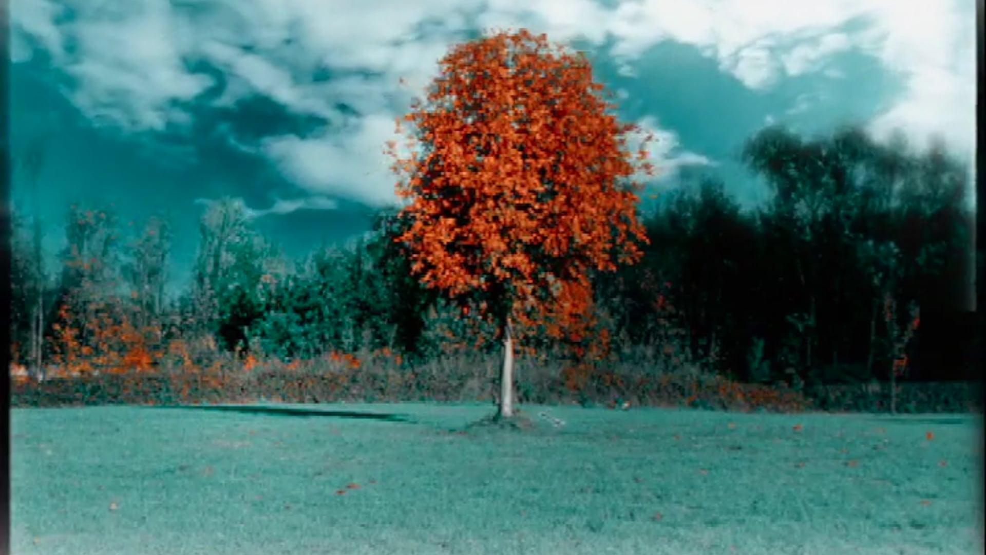 """JEROME COTTA """"L'arbre et le fruit"""""""