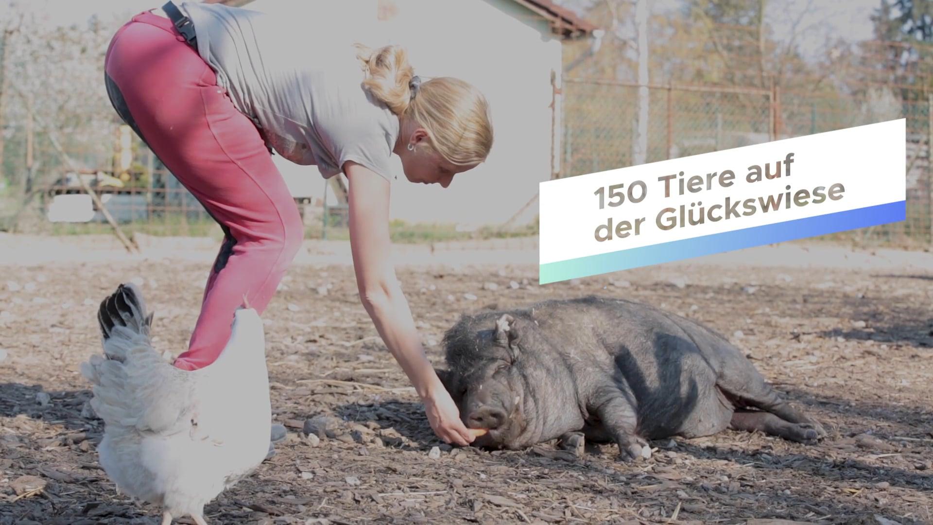 SINDLINGER GLÜCKSWIESE - eine Oase für Tier und Mensch