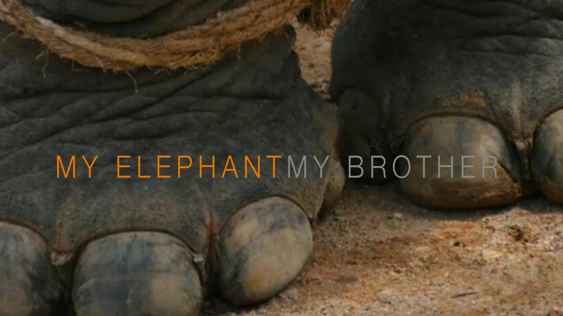 My Elephant, My Brother