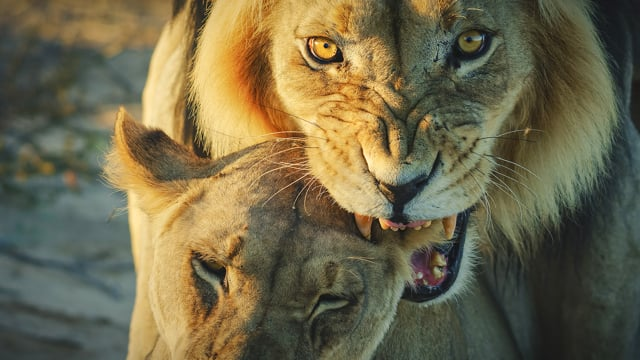 Wildlife of Kgalagadi Transfrontier Park, South Africa - Part #2 - Long Version