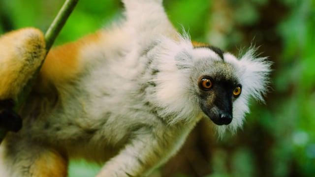 Madagascar Wildlife - Southeast coast of Africa
