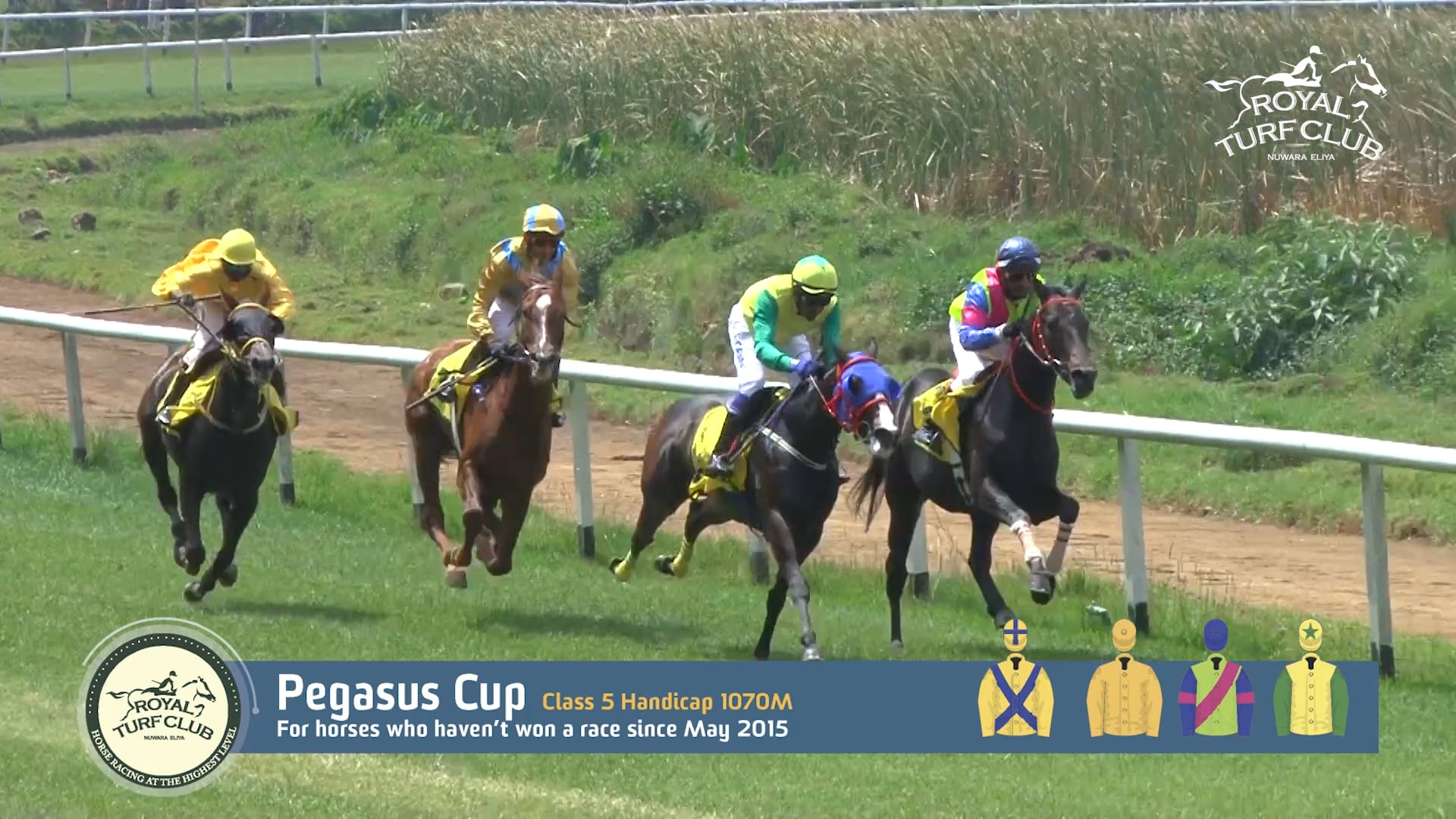 Pegasus Cup 2016