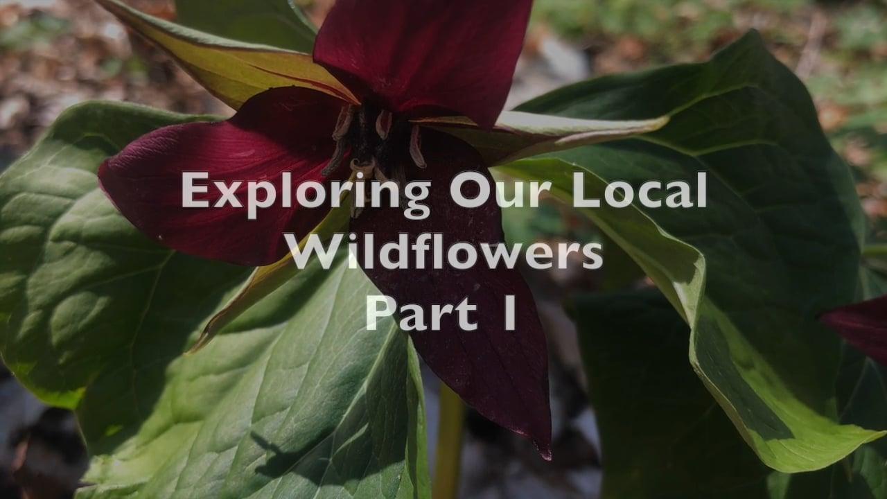 Spring Wildflowers: Part 1