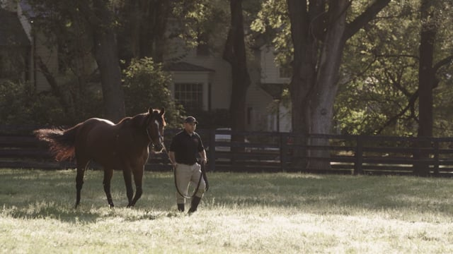 Goldencents Commercial   2020