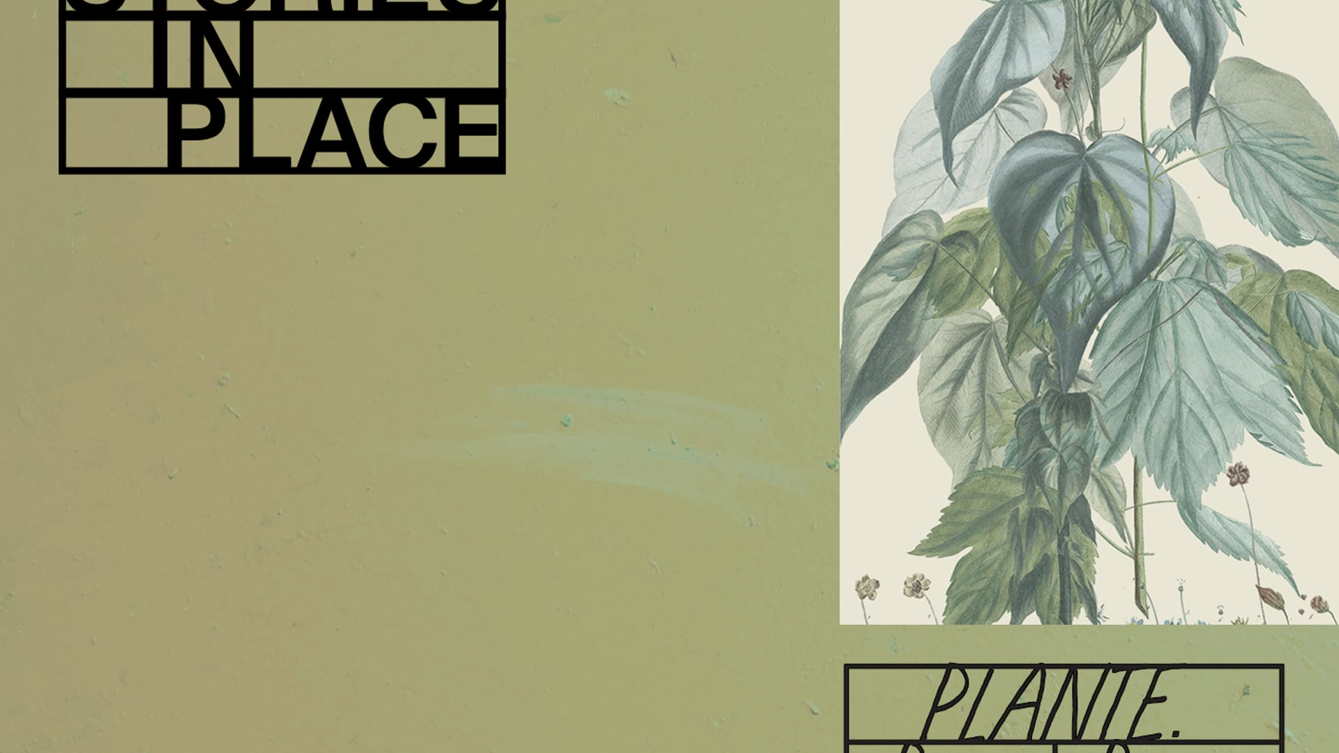 Stories In Place: Plante.