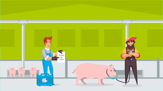 Healty Pig  -  Kanters