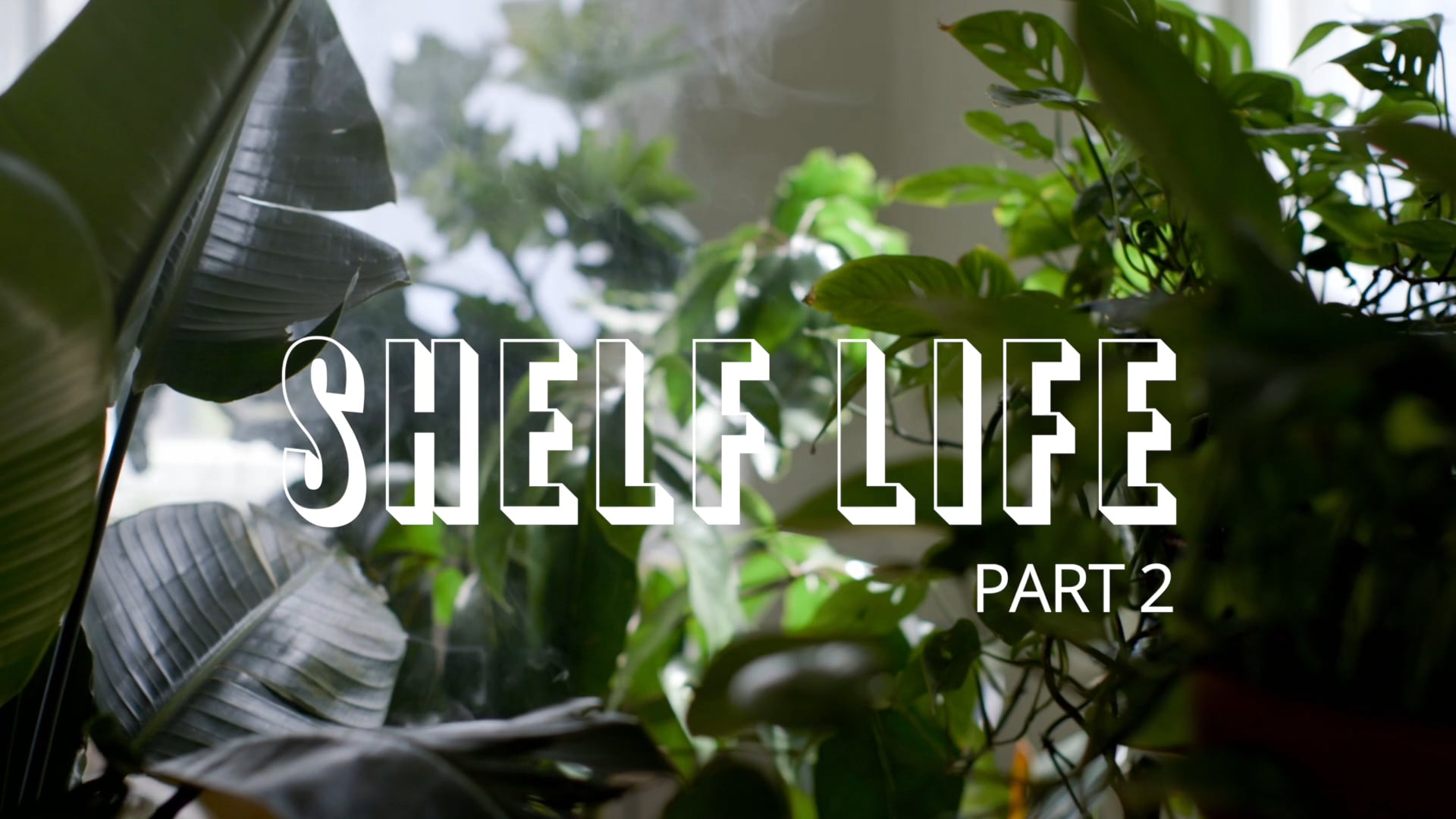 HOMESY X HILTON CARTER: Shelf Life Pt. 2