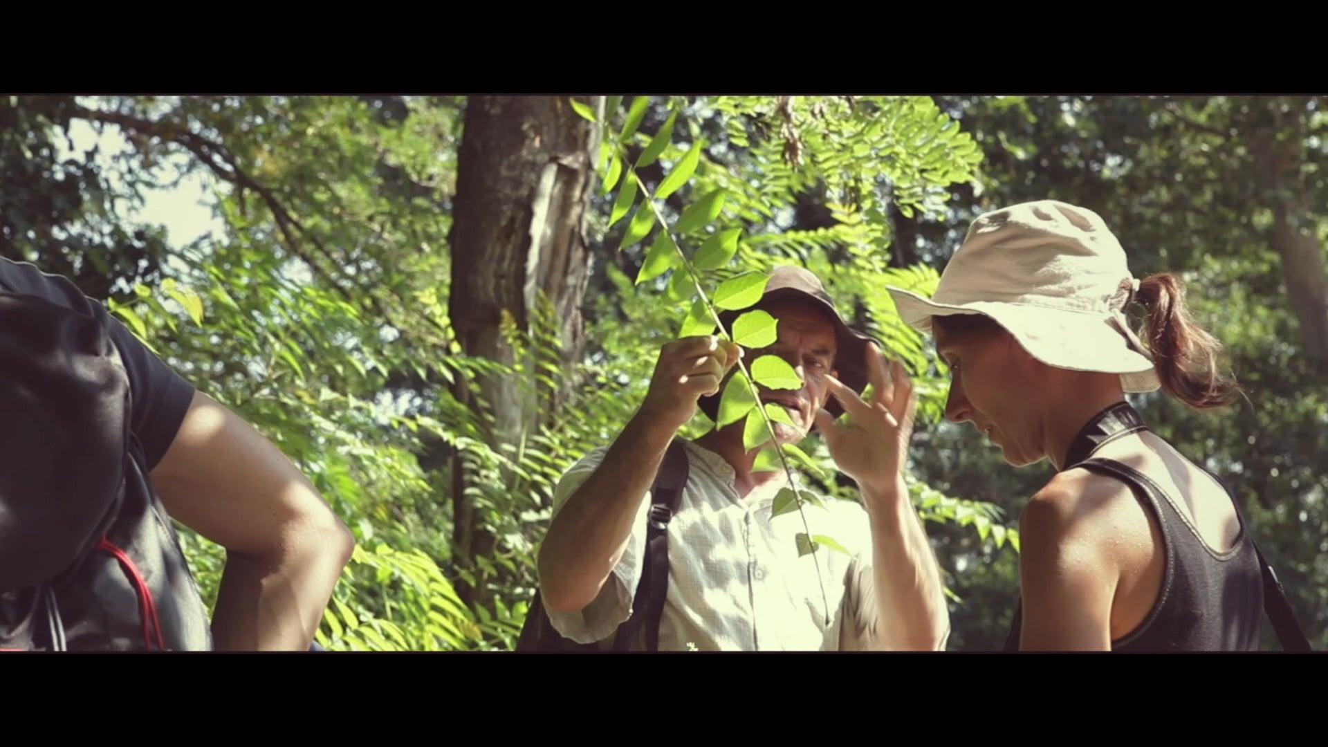 Découverte de la faune et de la flore sur le Canal du Midi