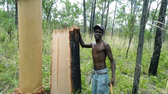 Sprotin Bangarr : Harvesting Bark