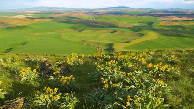 Steppe Flower Fields