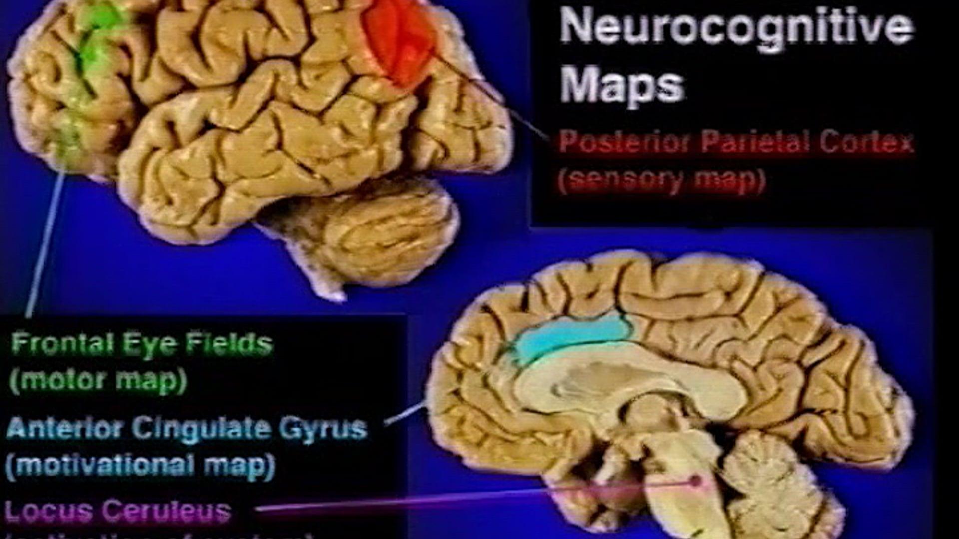 10. Psychology_