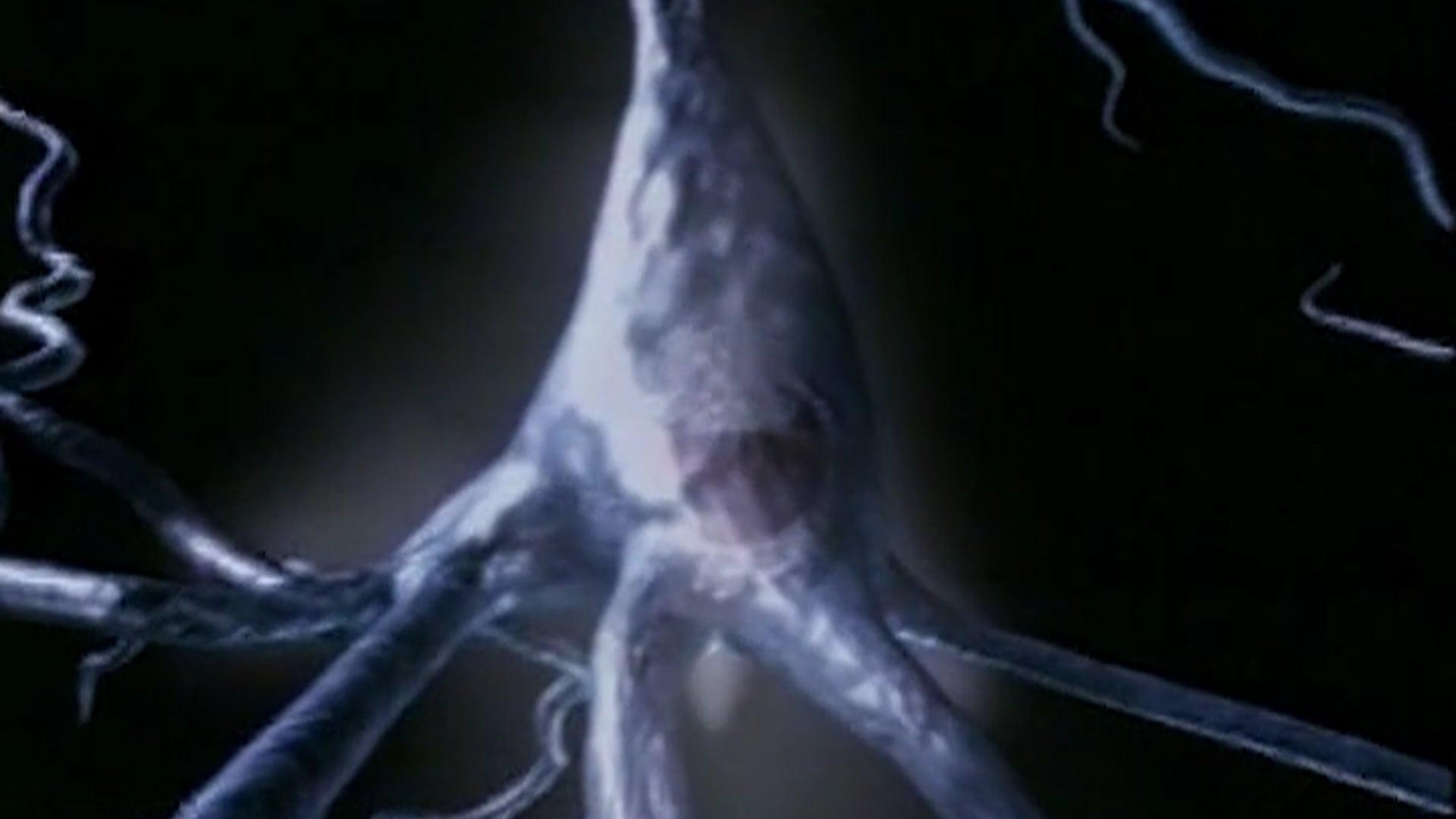 5 Neurophysiology_