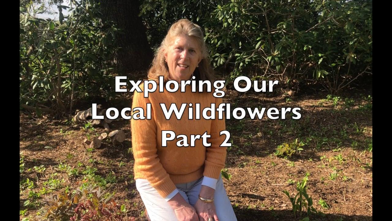 Spring Wildflowers: Part 2