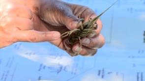 Macroinvertebrate Sampling at the Lake Waco Wetlands