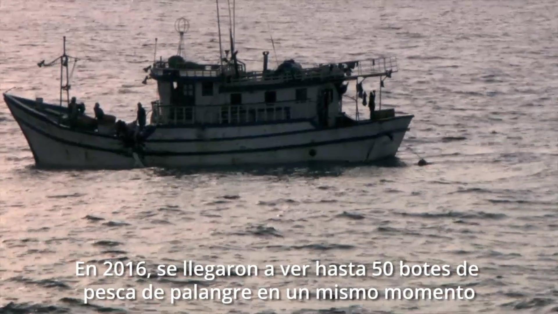Biodiversity Conservation Colombia-Silky en SFF Malpelo