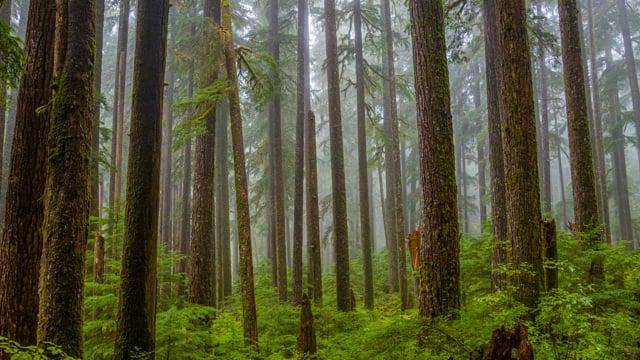 Sol Duc Falls Nature Trail - 4K Virtual Hike
