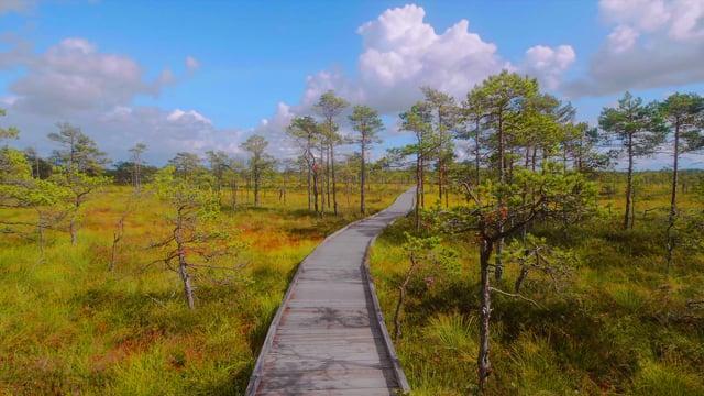 The Scenery of Estonia - Virtual Nature Walk Short Video