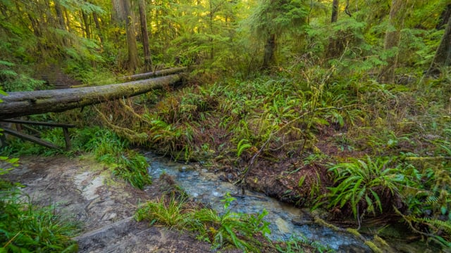 Walk in the Mossy Forest- Short Preview of the Virtual Hike Video