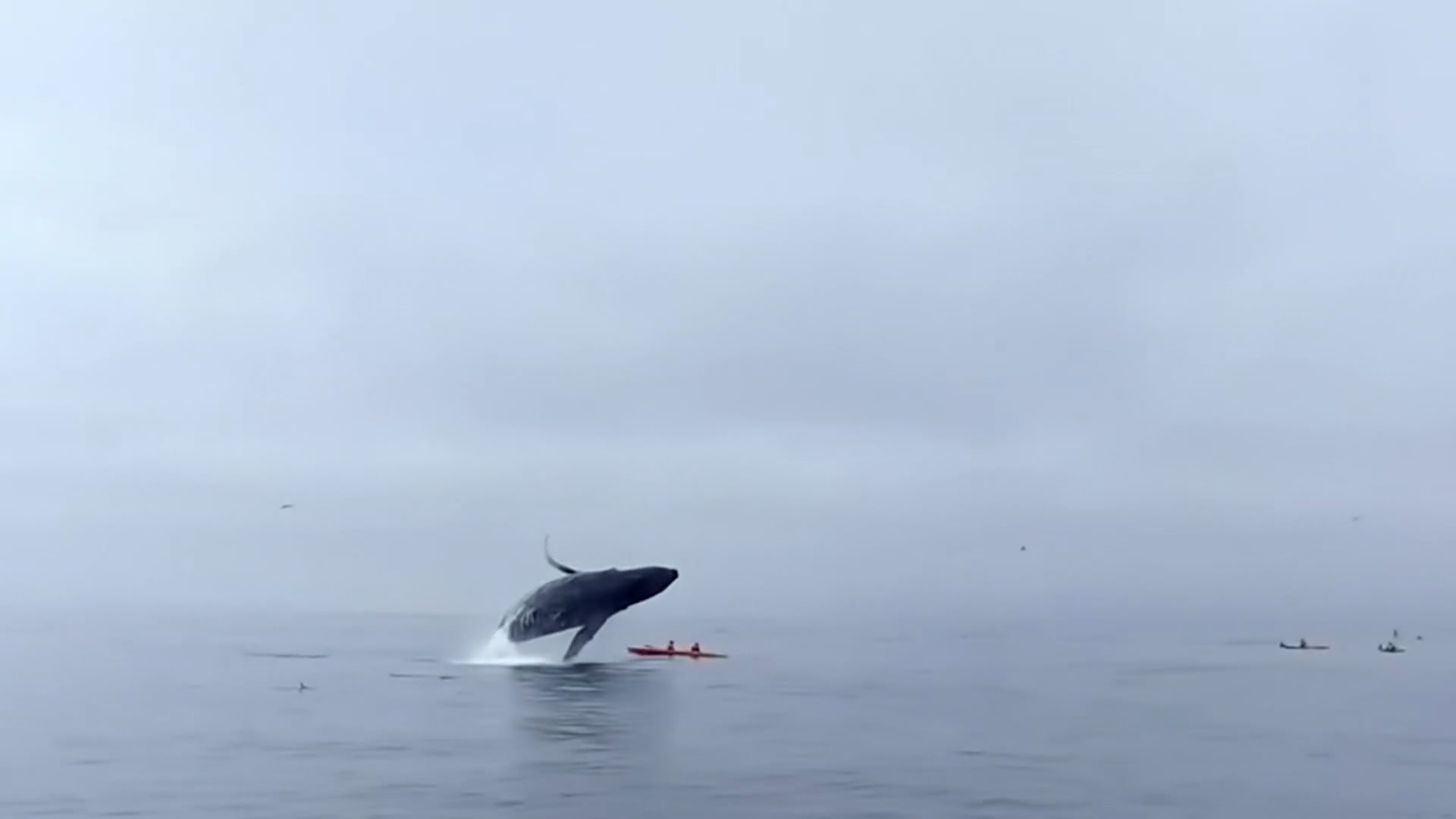 BBC Humpback Whales - A Detective Story