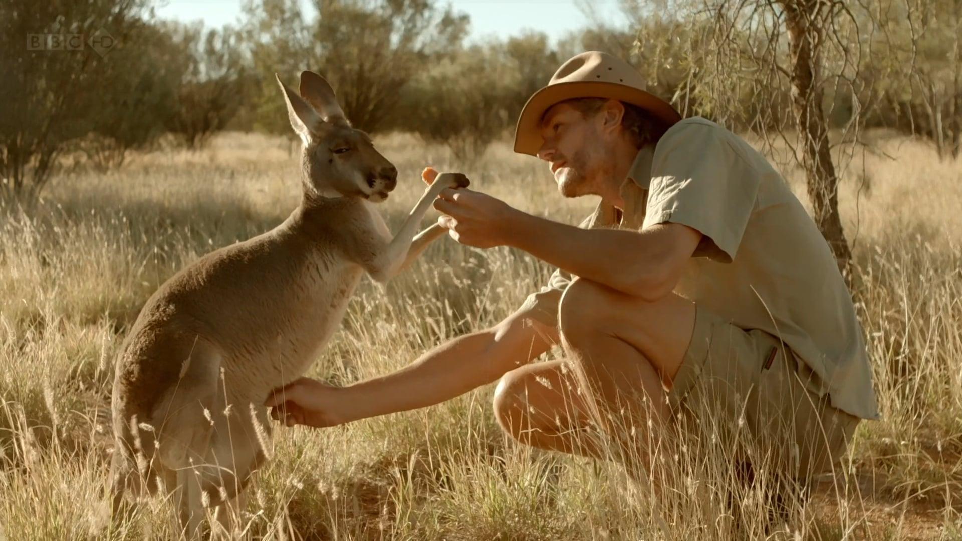 BBC Kangaroo Dundee narrated by Juliet Stevenson, Part 2 ( (Winner Jackson Hole, 2x Winner Montana, Nominee Grierson Award)