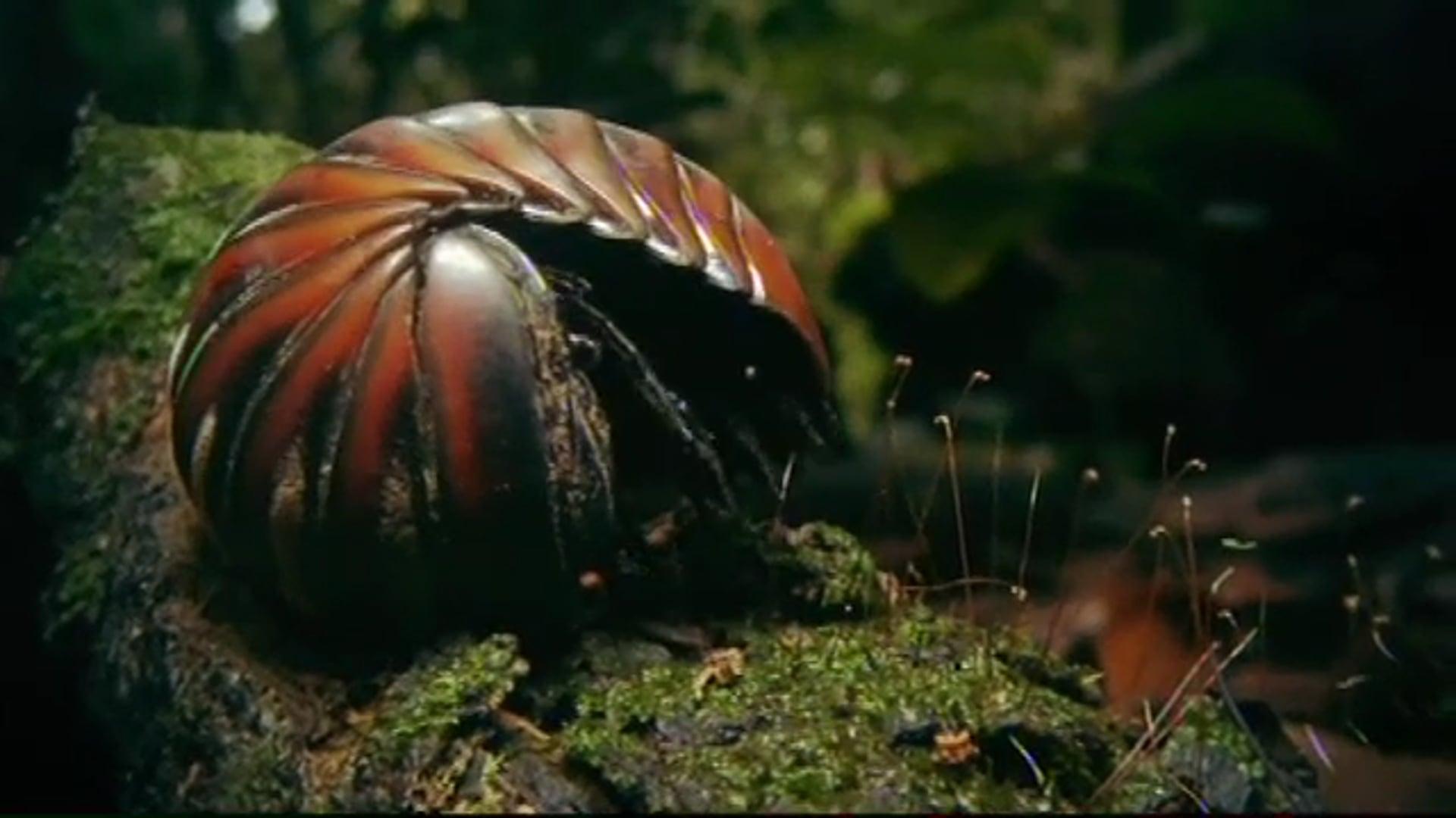 Inside Nature's Giants: Jungle Special (BAFTA WINNING SERIES)