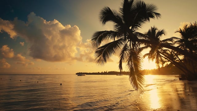 Tropical Sunrise - Nature Soundscape
