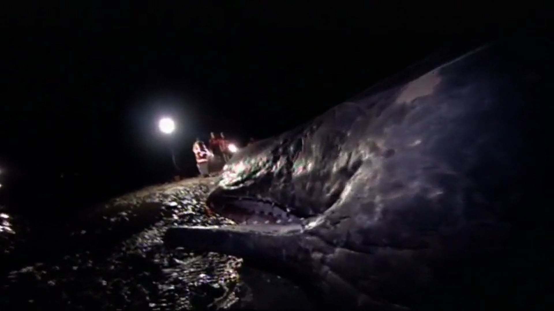 Inside Nature's Giants - Sperm Whale Special (BAFTA, Broadcast, RTS winning Series)