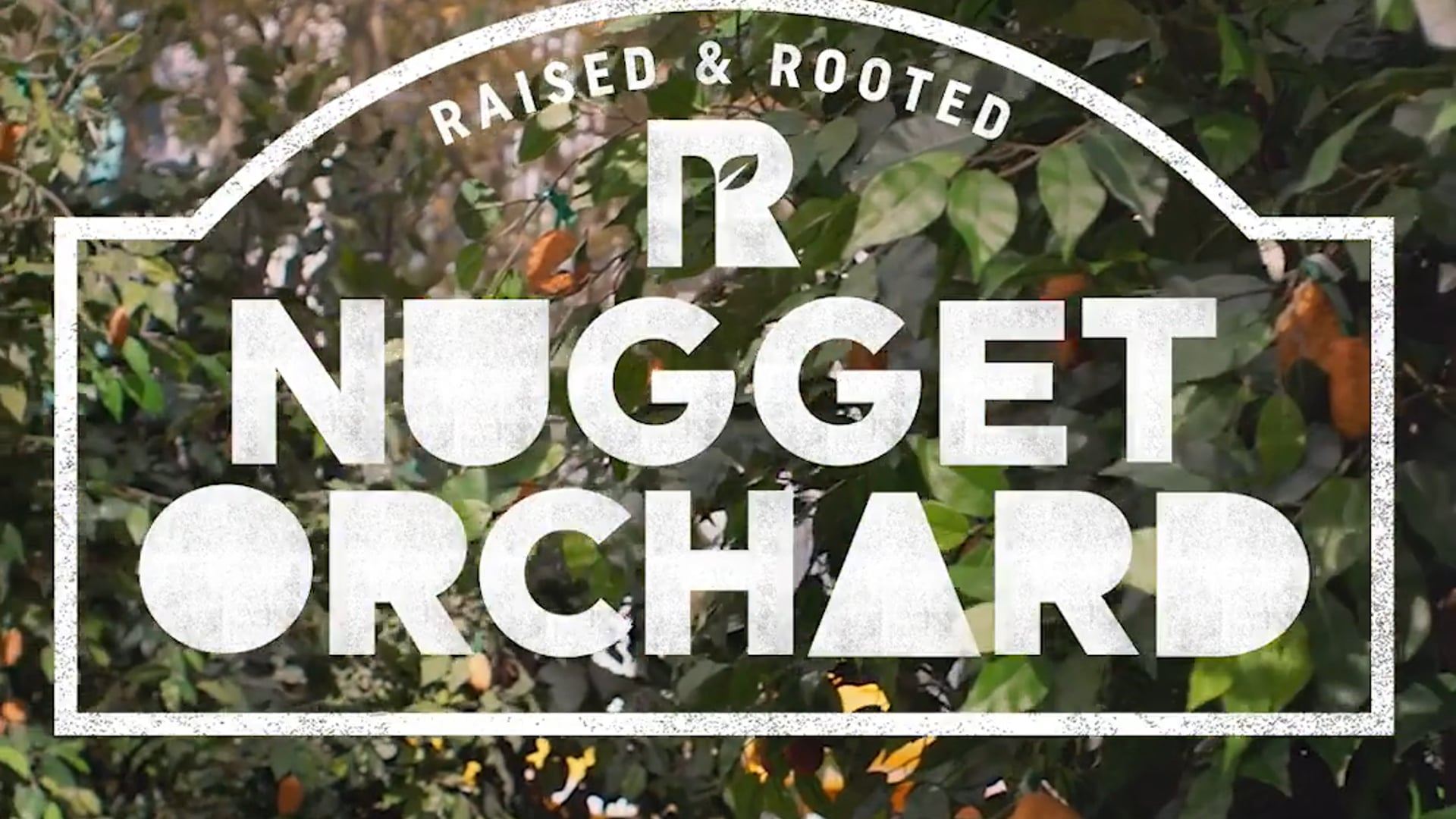 Ryan Andes - Raised and Rooted by Tyson Nugget Season Commercial : Web
