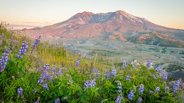 Sweeping View of Mt. St. Helens