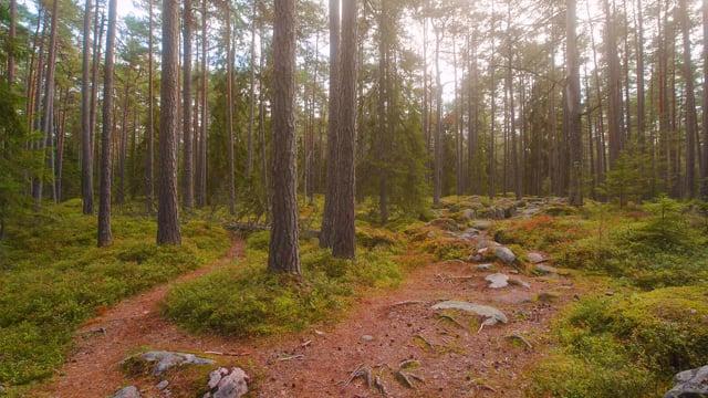 The Scenery of Estonia - Virtual Nature Walk