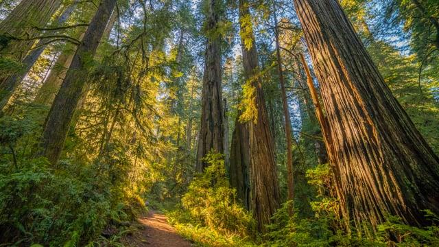 Walking at North Cascades - 4K Virtual Hike