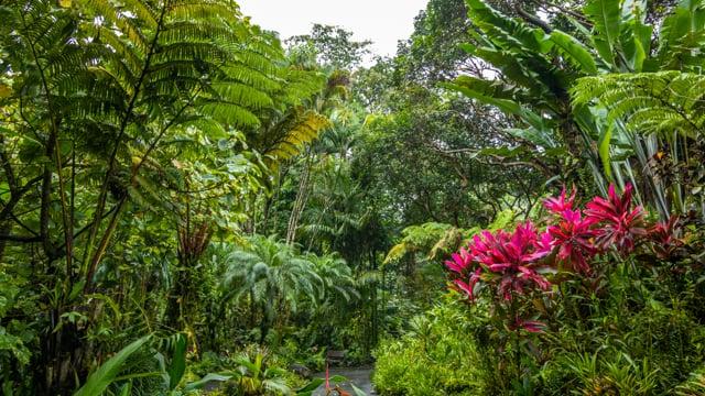 Virtual Walk through a Tropical Forest