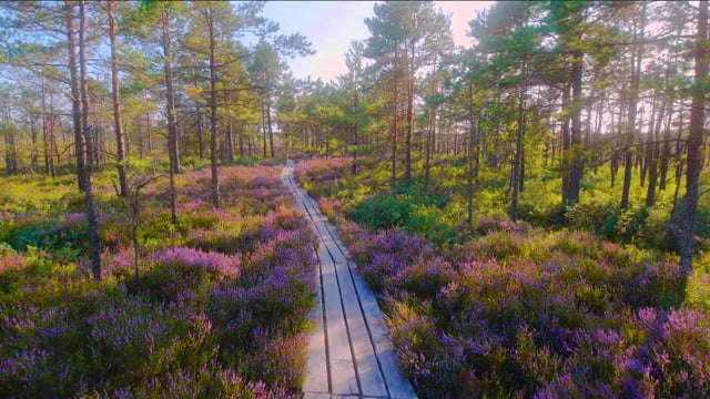The Beauty of Latvian Nature. Virtual Walking Tour