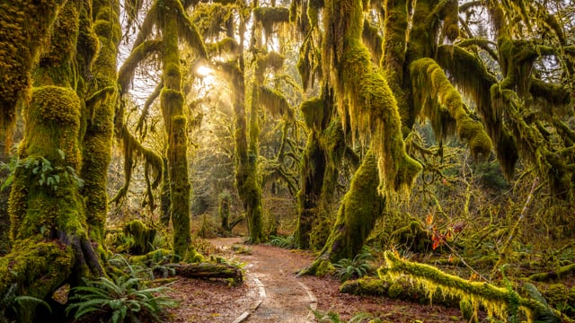 Virtual Hike along the Hall of Mosses and Spruce Nature Trails