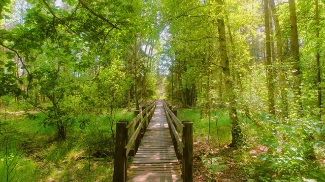 Beautiful Nature of Lithuania - 4K Virtual Walk Short Video
