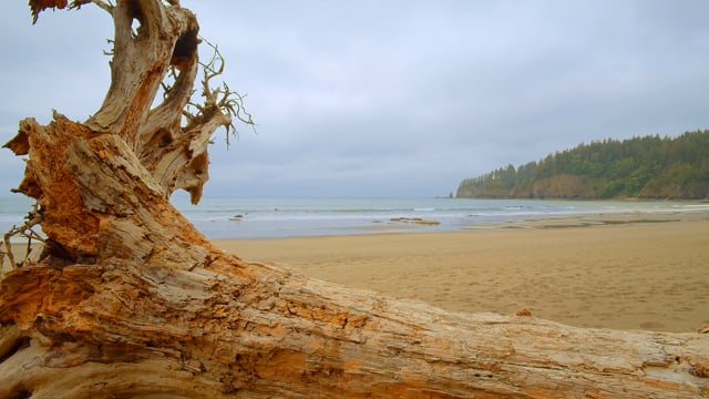 Third Beach Trail with Ocean Sounds, Olympic National Park - 4K 10 bit color