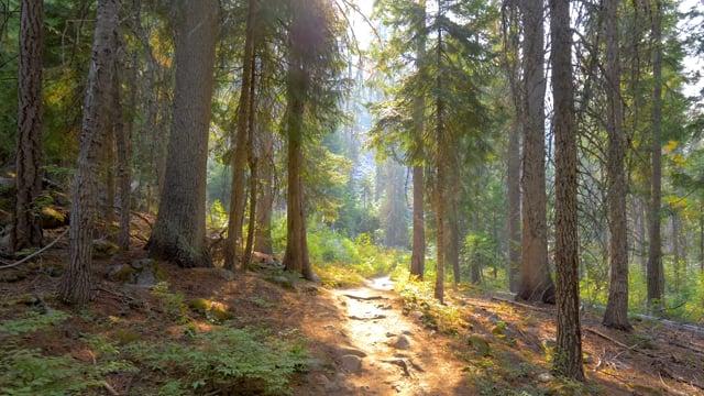 Central Cascades - Short Preview