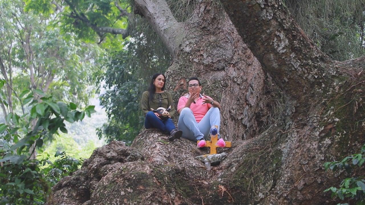 Orgullo Veracruzano: El Descabezadero y Coyolillo