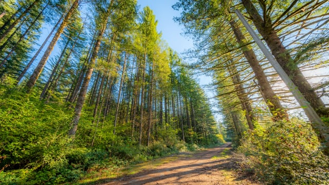 Virtual Forest Hike - Cedar Butte Trail